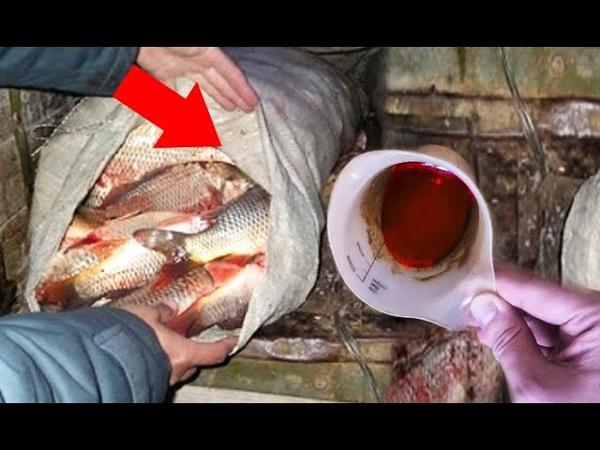 Будете ведрами ловить рыбу, перелов отпускайте, это лучше прикормки, аттрактант и активатор клева