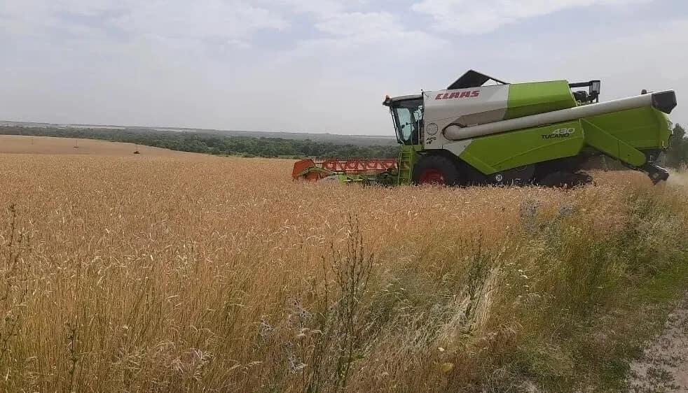 Петровские аграрии начали уборку озимой пшеницы