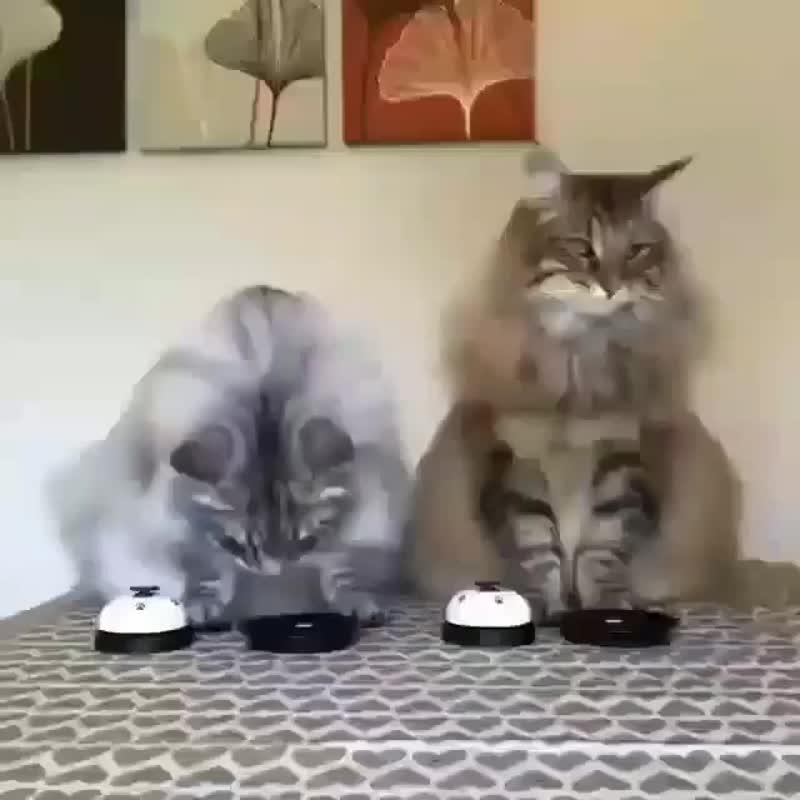 У нашего кота этот звонок работал бы постоянно