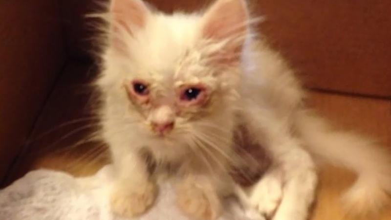 Семья подобрала бродячую кошку Никто и представить не мог кем она станет через несколько недель