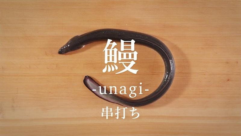 鰻(うなぎ)のさばき方:串打ち - How to filet Japanese Eel ver. Kushi-uchi -|日本さばけるプロジェクト