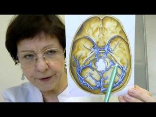 Шум в ушах, писк, звон: ответы невролога на ваши вопросы
