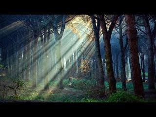 Божественно /  Звуки Природы без Музыки / Утреннее Пение Птиц в Лесу