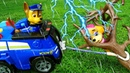 Игрушки Щенячий Патруль Мегащенки попали под дождь, Чейз спасает Скай! Видео про щенков спасателей