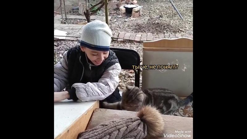 Кот Тайсон не разрешает сыну и собаке издавать не правильные звуки Кот Тайсон царь зверей и людей