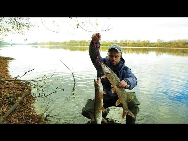 ТУМАН РАССЕЯЛСЯ и ЩУКА НАЧАЛА ВОЙНУ Рыбалка на Оке Щука на спиннинг осенью