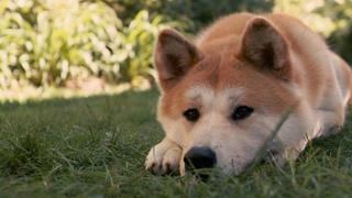 Хатико: Самый верный друг. 1080p HD | Hachi: A Dog's Tale