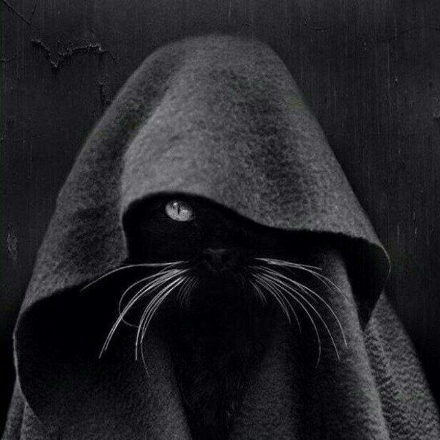 Кошка в капюшоне картинка
