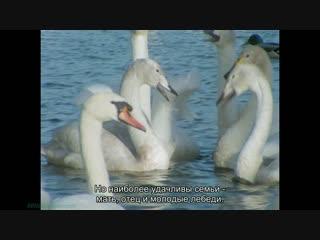 BBC Уроки выживания (09). Друзья и соперники (Познавательный, природа, животные, 1990)