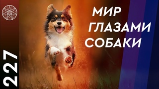 Вопросы кинологии. Как защититься от нападения собак? Кармические последствия убийства животных.
