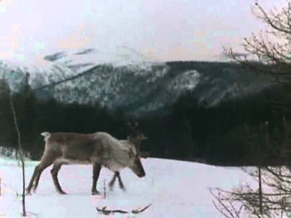 Баргузинский заповедник 1971 фильм смотреть онлайн