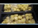 Автоклав для консервирования ИПКС-128-500. Варка овощей в вакуумной упаковке картофель, свёкла.