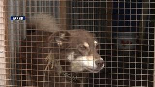 В Кугесях идет строительство приюта для  бездомных животных