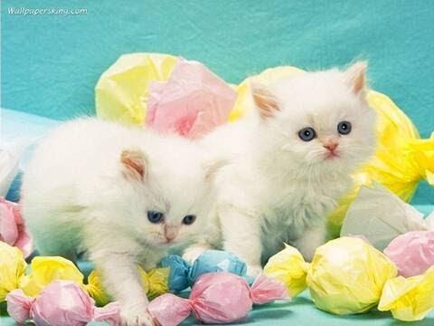 Cute cats kittens