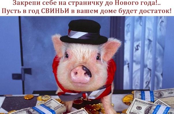 Обои На Рабочий Стол Свинки Новый Год