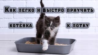 Как легко и быстро приучить котёнка к лотку