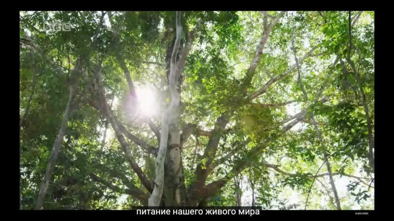 Совершенная Планета A Perfect Planet Extended Trailer New David Attenborough Series BBC Earth 2020 rus sub