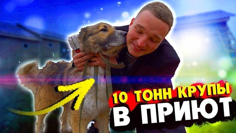 EDWARD BIL КУПИЛ 10 ТОНН КРУПЫ ОТВЁЗ В ПРИЮТ ДЛЯ ЖИВОТНЫХ