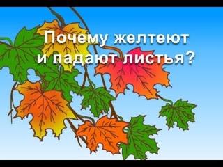 Обучающий мультфильм - Почему желтеют и падают листья? Развивающий мультик для детей
