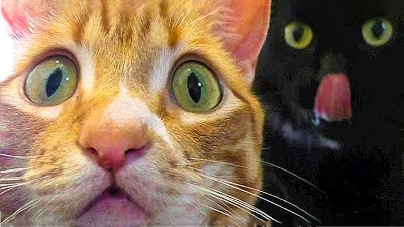 🤣 Funniest 😻Cats And 🐶 Dogs Try Not To Laugh Funny Pet Animals' Life 😇