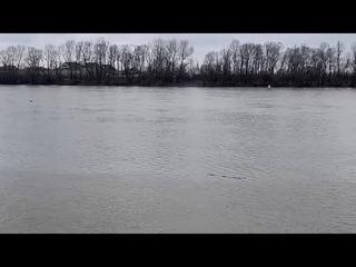 ШОК! НЕ РАЗРЕШАЙТЕ ДЕТЯМ КУПАТЬСЯ В реке КУБАНЬ!
