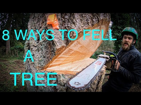 WORLDS BEST TREE FELLING TUTORIAL! Way more information than you ever wanted on how to fell a tree!