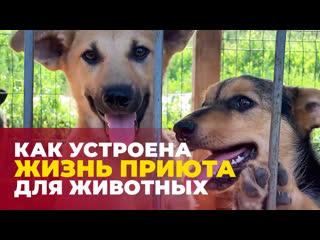Кот и пес: как устроен приют для животных, в котором бок о бок живут около 500 собак и кошек