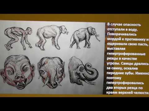 Инволюция человекослонов А Белов 5 июня 2020