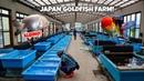 HUGE GOLDFISH FARM Tour in Japan!