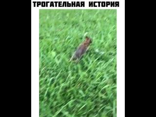 Видео Юмор в Instagram «ПОДПИСЫВАЙСЯ @Огромная п