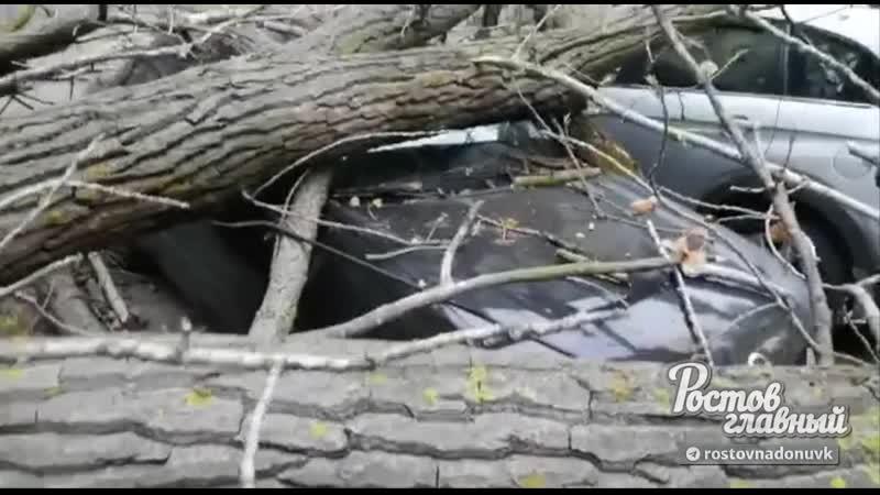 В Азове ветер повалил деревья 30 9 2020 Ростов на Дону