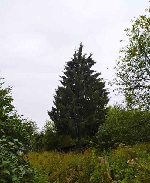 нас фото всех деревьев растущих в костроме приготовить сом