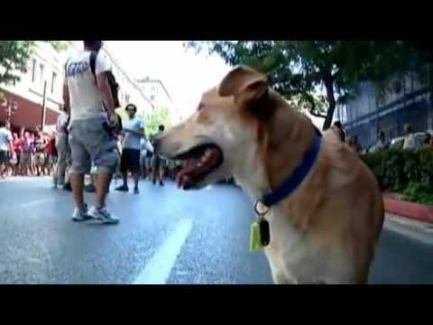 Sausage Loukanikos aka Luke the riot dog of Greece Athen