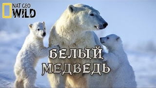 Белый Медведь - Супер хищник. Мир природы дикие животные. #Документальный фильм. National Geographic