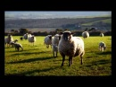 J.S.Bach-E.Petri Sheep May Safely Graze(Schafe können sicher weiden) , Aria from Cantata BWV 208