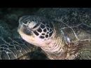 Чудеса дикой природы с Девидом Айрлендом - Обитатели глубин 1080i