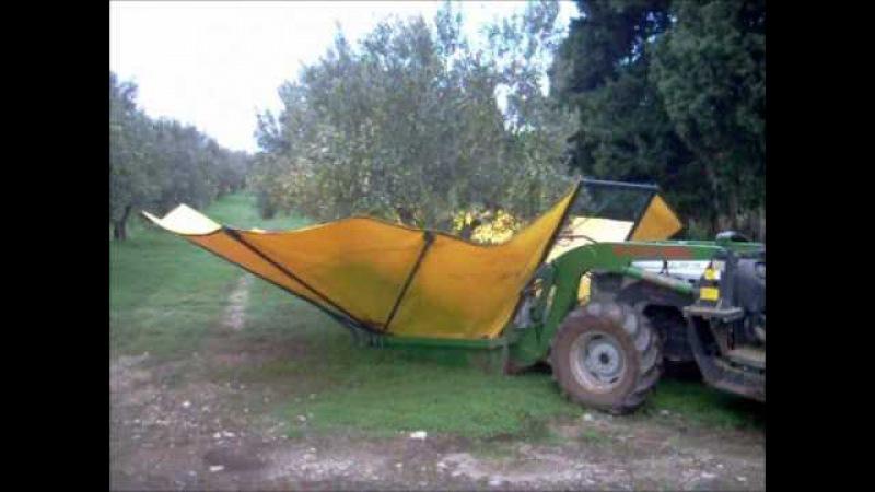 Raccolta olive con ombrello rovescio SICMA cernitrice.