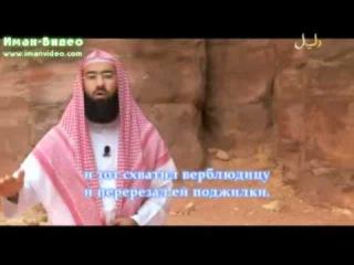 Истории о пророках Салих (а.с.)