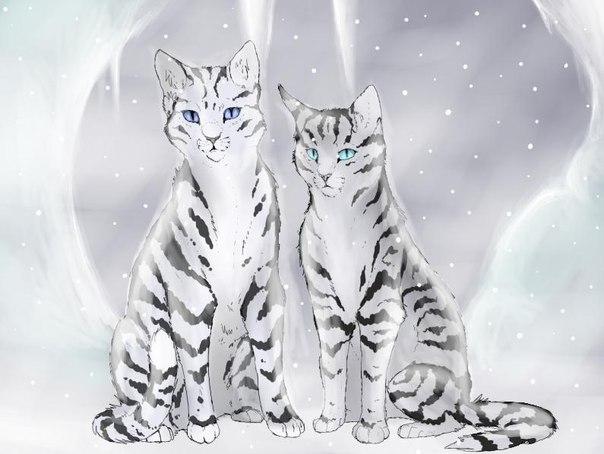 зима картинки котов воителей