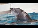 Одинокий Дельфин