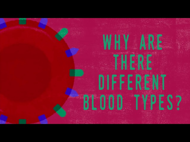 Why do blood types matter Natalie S Hodge