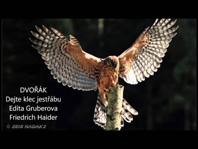 Dvorak Dejte klec jestrabu Give a Hawk a Fine Cage Edita Gruberova