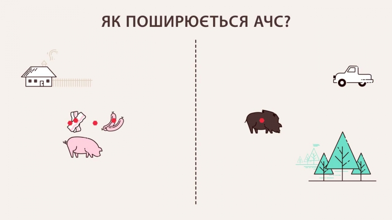 Підвищення обізнаності щодо Африканської чуми свиней в Україні
