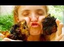 Гриб Чага, чем полезна Чага - Чудо гриб где купить Чагу, березовый гриб, лечение Чагой