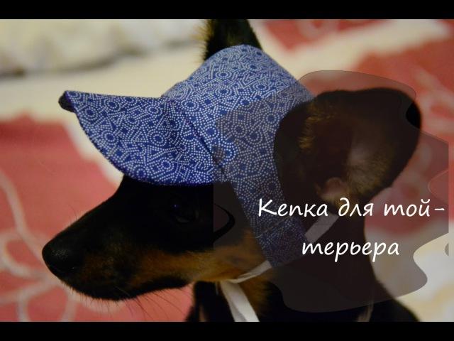 Летняя кепка для собаки своими руками той терьер