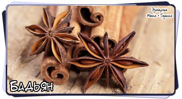#Ezomagic_Травы  Бадьян  В качестве пряности употребляют сухие зрелые плоды бадьяна....