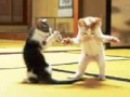 Смішне видео про котів