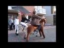 Детская механическая лошадка PONYCYCLE. Понициклы. Пони.