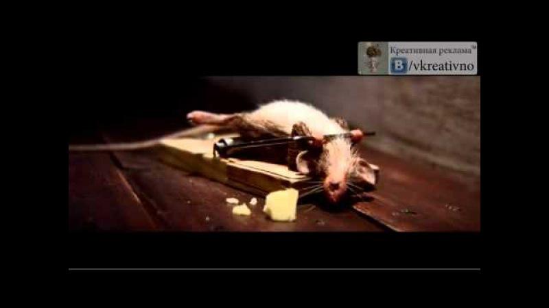 Реклама сыра Мышь в мышеловки