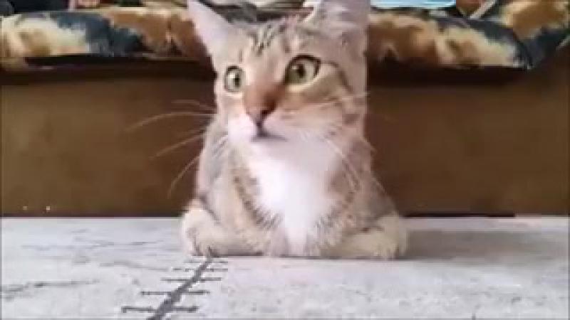 Котик смотрит фильм ужасов